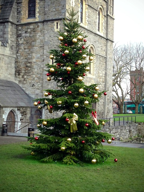 tree at Christ Church in Dublin