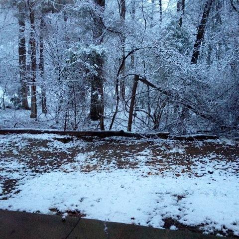 feb snow at jamies
